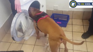 Training Archie to empty the washing machine